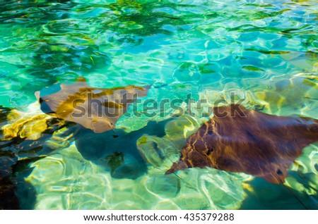Cramp-fishes - stock photo