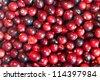 Cranberries - stock photo