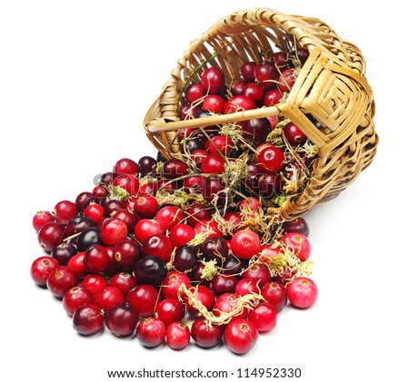 Cranberries and moss near the basket on white