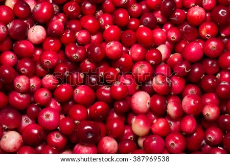 Cranberries in bulk. - stock photo