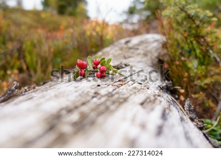 Cranberries on wooden - stock photo