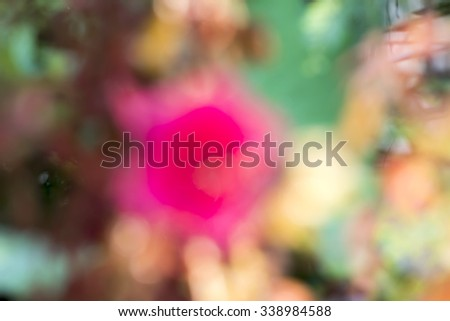 Cranberry hibiscus, African rose mallow, red flowers in the garden. (Blurred). - stock photo
