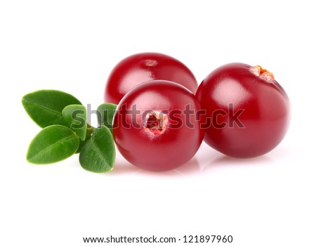 Cranberry in closeup - stock photo
