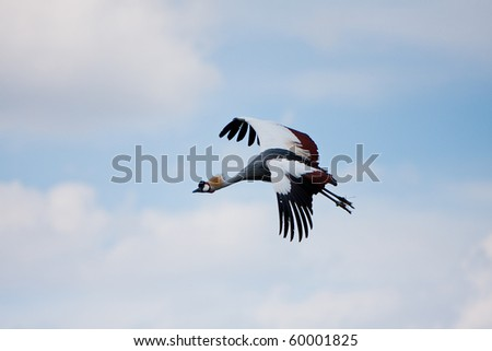 crane Flying - stock photo