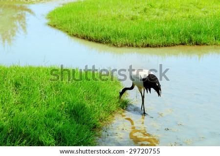 crane with gree grass colors in the background - stock photo