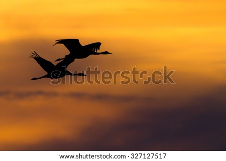 Cranes in the sunset 2