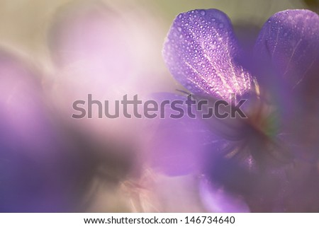 cranesbill - violet close-up with blurred background - stock photo