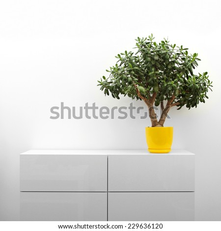 crassula plant on white commode in minimalism interior - stock photo