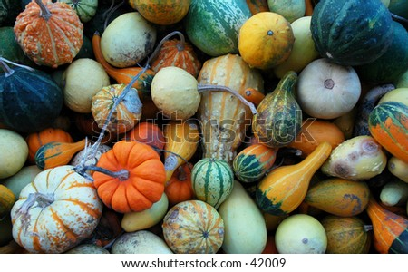 Crate full of pumpkin gourds at a local farm - stock photo