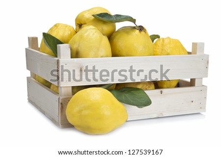 Crate with premium fresh quinces freshly harvested to cook.