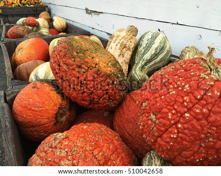 Crates of gourds on the farm
