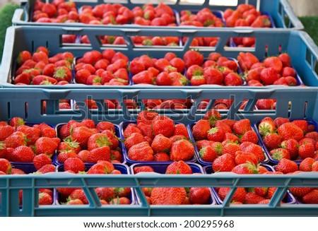 Crates of strawberries on the market horizontal - stock photo