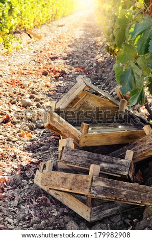 Crates ready for grape harvesting