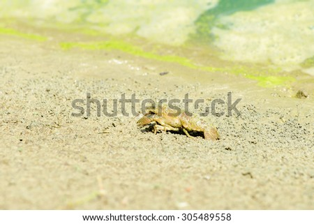 CRAYFISH AT THE EDGE OF A MICHIGAN POND - stock photo