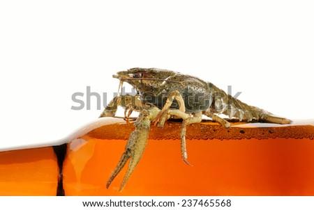 Crayfish isolated on white background - stock photo