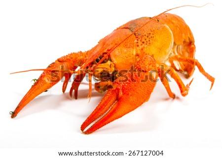 Crayfish on a white background. Crayfish isolated on white - stock photo