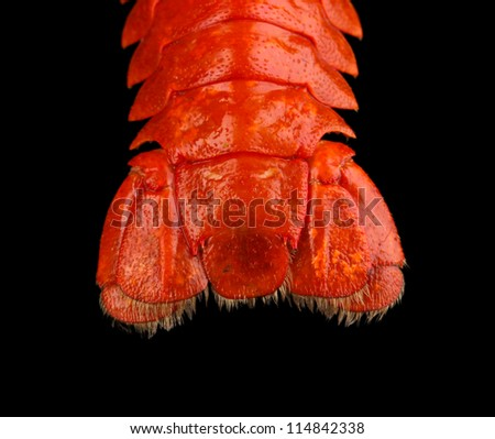 crayfish tail isolated on black