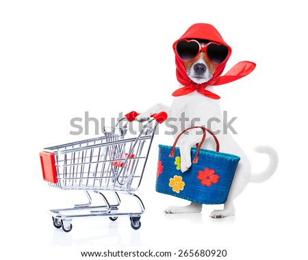 crazy and silly  jack russell dog diva lady with bag pushing  empty supermarket cart , isolated on white background - stock photo