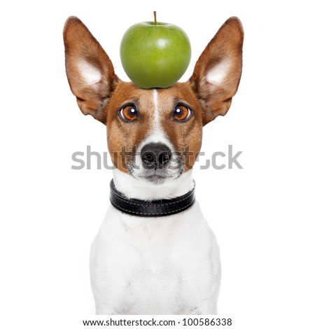 crazy dog with big lazy eyes and an apple