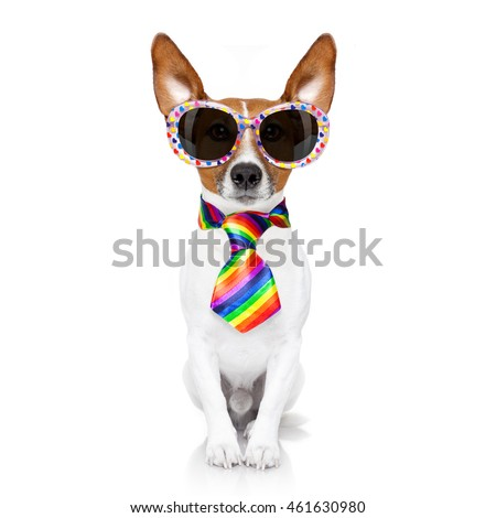 crazy funny gay dog proud of human rights ,sitting and waiting, with rainbow flag and sunglasses, isolated on white background