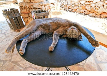 Crazy lazy cat lying outside on a small table on the island Zakynthos, Greece - stock photo