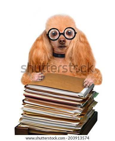 crazy silly dog behind a tall stack of books