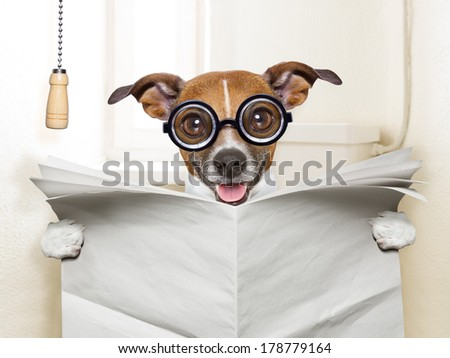 crazy silly dog sitting on toilet and reading magazine - stock photo