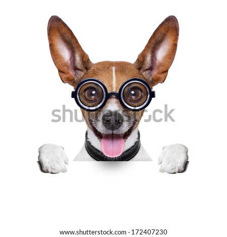 crazy silly dog with funny glasses behind blank placard - stock photo
