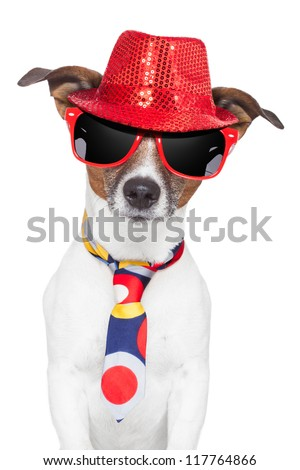 crazy silly funny dog hat glasses  and tie