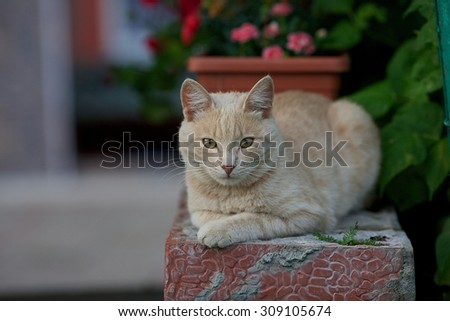 Cream-colored cat lying on masonry