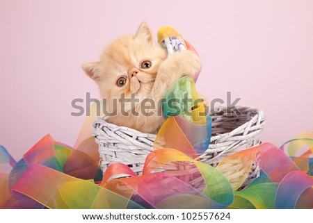 Cream Exotic kitten hugging basket with tie dye ribbon on pink lilac background - stock photo