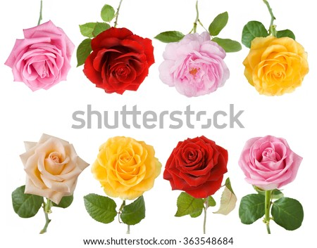 Cream, red, yellow and pink rose flowers set isolated on white background - stock photo