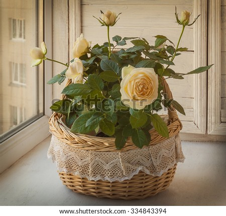 Cream rose in a romantic basket on   window. Retro toning - stock photo