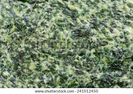 Creamed spinach as background and texture (manual focus) - stock photo