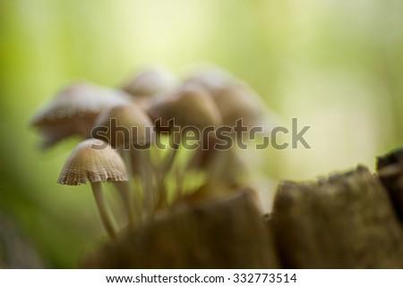 Creative autumn landscape with mushrooms - stock photo