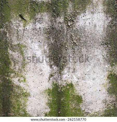 Creative background beautiful green moss, cracks and scratches on the concrete. Grungy concrete surface. Great background or texture for your project. - stock photo