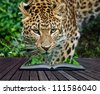 Creative composite image of leopard in pages of magic book - stock photo