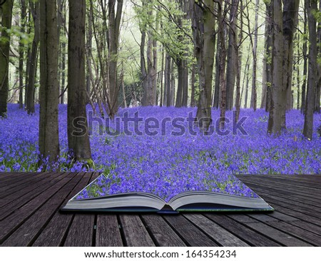 Creative concept pages of book Beautiful carpet of bluebell flowers in Spring forest landscape