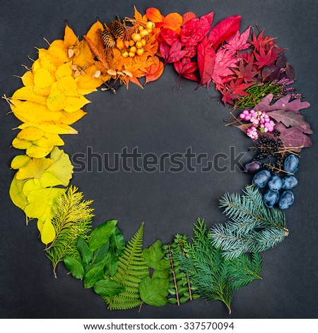 Creative concept with collection of colorful natural objects shaped in the color wheel on dark paper background