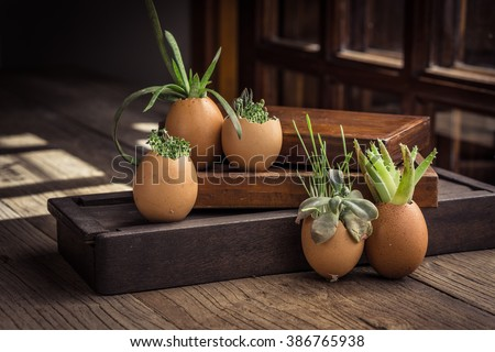 Creative DIY. Plant Succulents in Eggshells and vintage wooden boxes. Easter boho Easter party favor  - stock photo