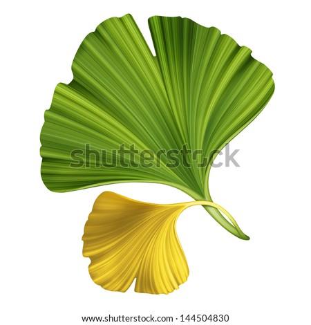 creative foliage, illustration of ginkgo leaves isolated on white background - stock photo