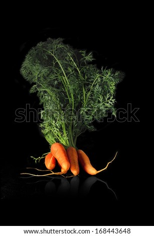Creatively lit organically grown carrots against a black background. Copy space. - stock photo