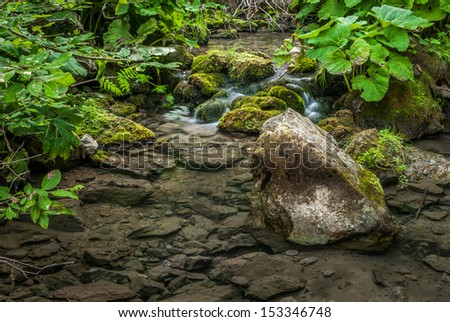 creek and lush vegetation in the forest - stock photo