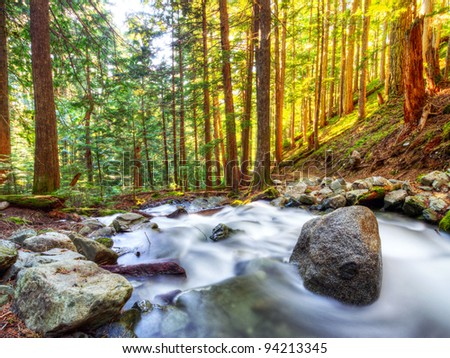 Creek Flowing through Pacific Northwest Forest - stock photo