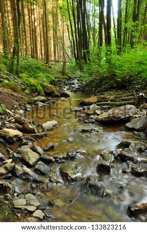 Creek in a Forest - A clear creek in a forest with pine trees in the Belgian Ardennes