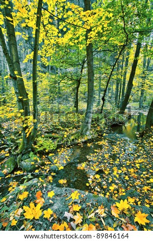 Creek in fall time - stock photo