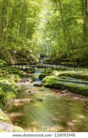 Creek in summer forest - stock photo