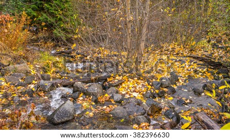 creek in the autumn forest - stock photo