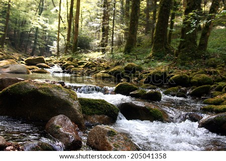 creek in the black forest, Germany - stock photo
