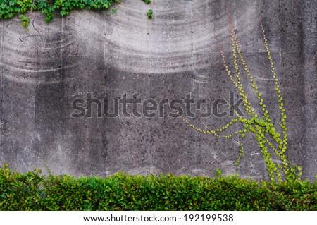 Creeper plant on a brick wall - stock photo